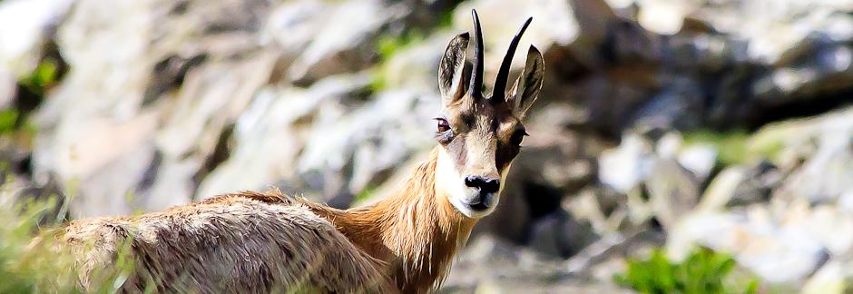 Safari photo dans la vallée des Merveilles