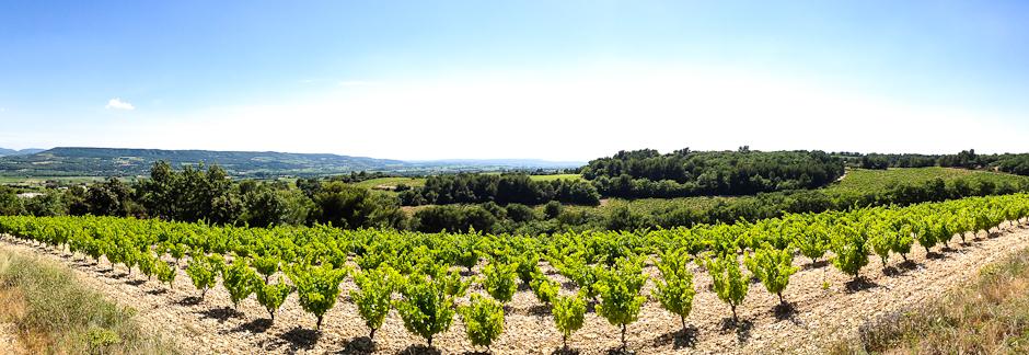 Découverte des vins bio et du terroir