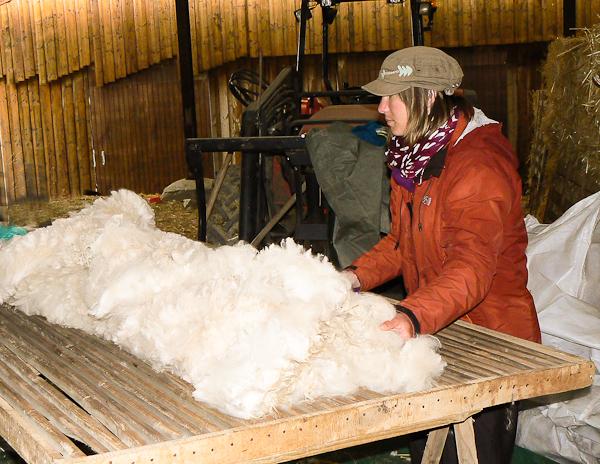 Alpaga et feutrage de laine