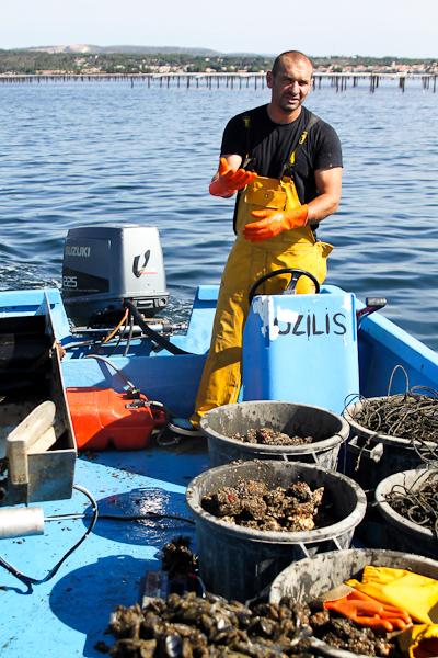 Coquillages et vin : dégustation découverte au bord de l'étang
