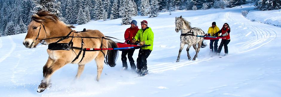 Découverte du ski joëring en Haute Savoie