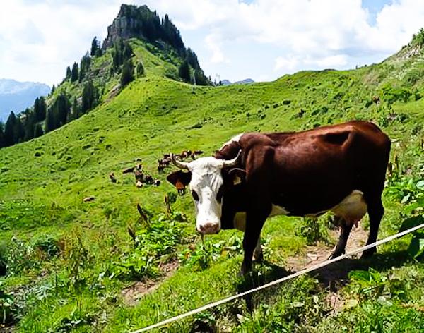 Randonnée fromagère dans les alpages des Aravis