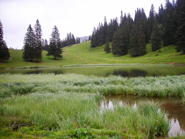 Randonnée estivale : l'Abondance de l'alpage à l'assiette