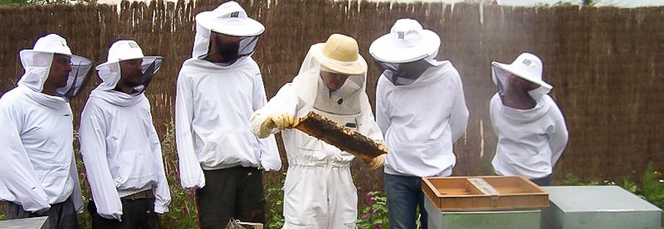 Tout savoir sur les abeilles avec un apiculteur !