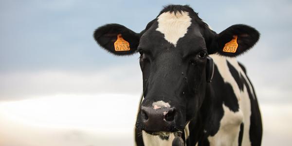 Du lait à la glace : Visite d'une ferme fabricante de glaces artisanales dans le Forez