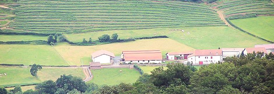Ossau-Iraty : visite de la bergerie et dégustation de produits basques