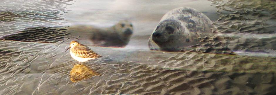 Observation des phoques et des oiseaux de la Baie de Somme