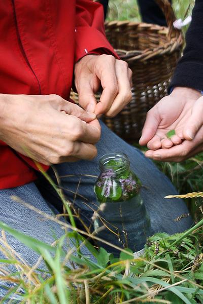 Cueillette et cuisine de plantes sauvages en Baie d'Authie