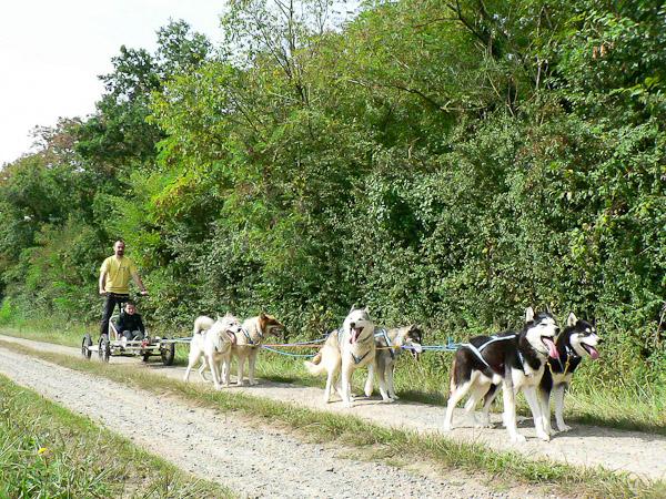 Balade insolite en Kart tiré par les chiens de traîneau, près de Saumur