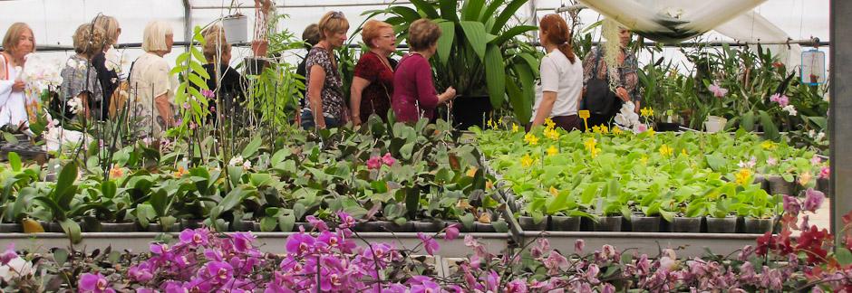 Découverte des orchidées : visite de serres dans le Var