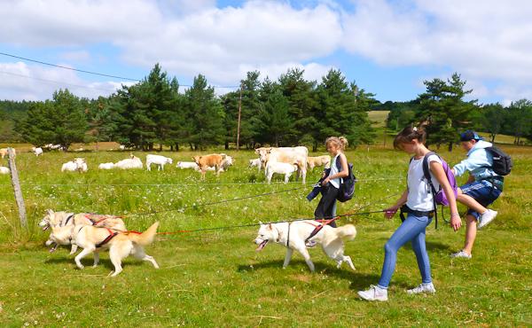Cani-randonnée : sortie insolite au Sud-Est de St Etienne