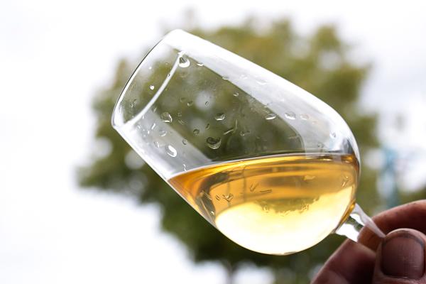 Parler du vin, connaître son élaboration avec un oenologue