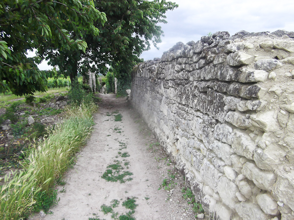 Angers : Visite et découverte œnologique des vins de Val de Loire