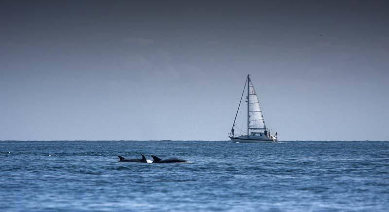 Journée en voilier pour photographier les dauphins !