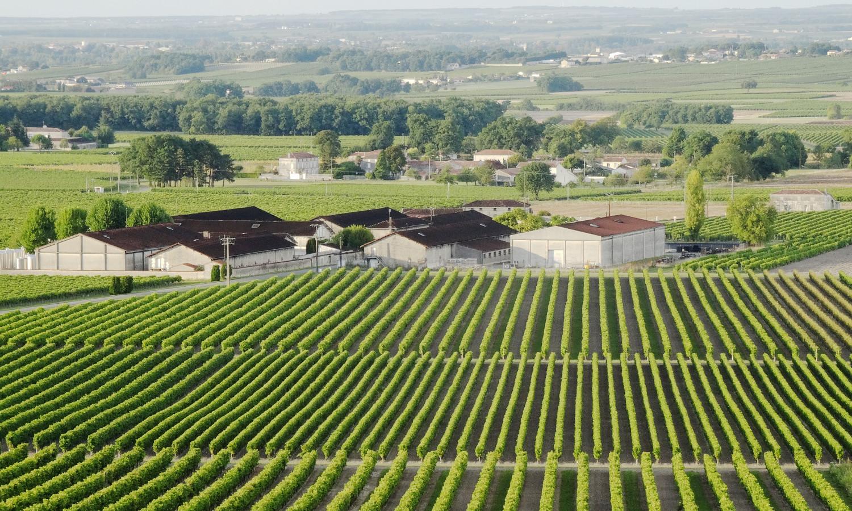 Journée excursion au pays du Cognac : vignobles & distilleries