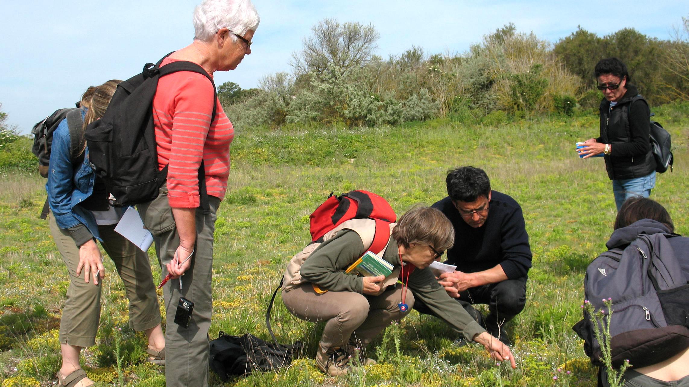 Balade nature à la découverte des plantes littorales charentaises sur l'île de Ré