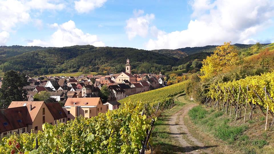 Excursion d'une journée à la découverte des vins d'Alsace