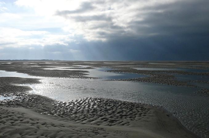 Une demi-journée à la découverte des phoques de la Baie de Somme