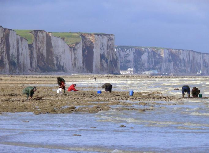 Balade guidée pour découvrir les falaises de la Baie de Somme