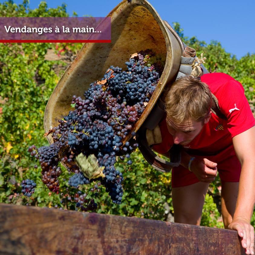 Vis ma vie de vigneron : participez aux vendanges !