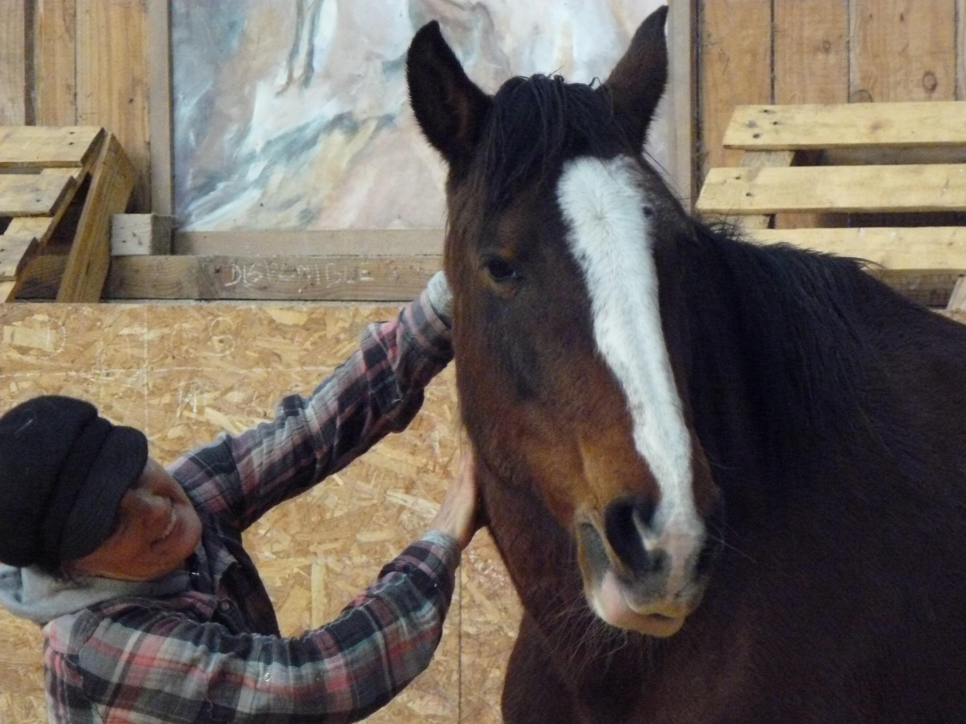 Journée découverte : le cheval pour mieux se connaître...