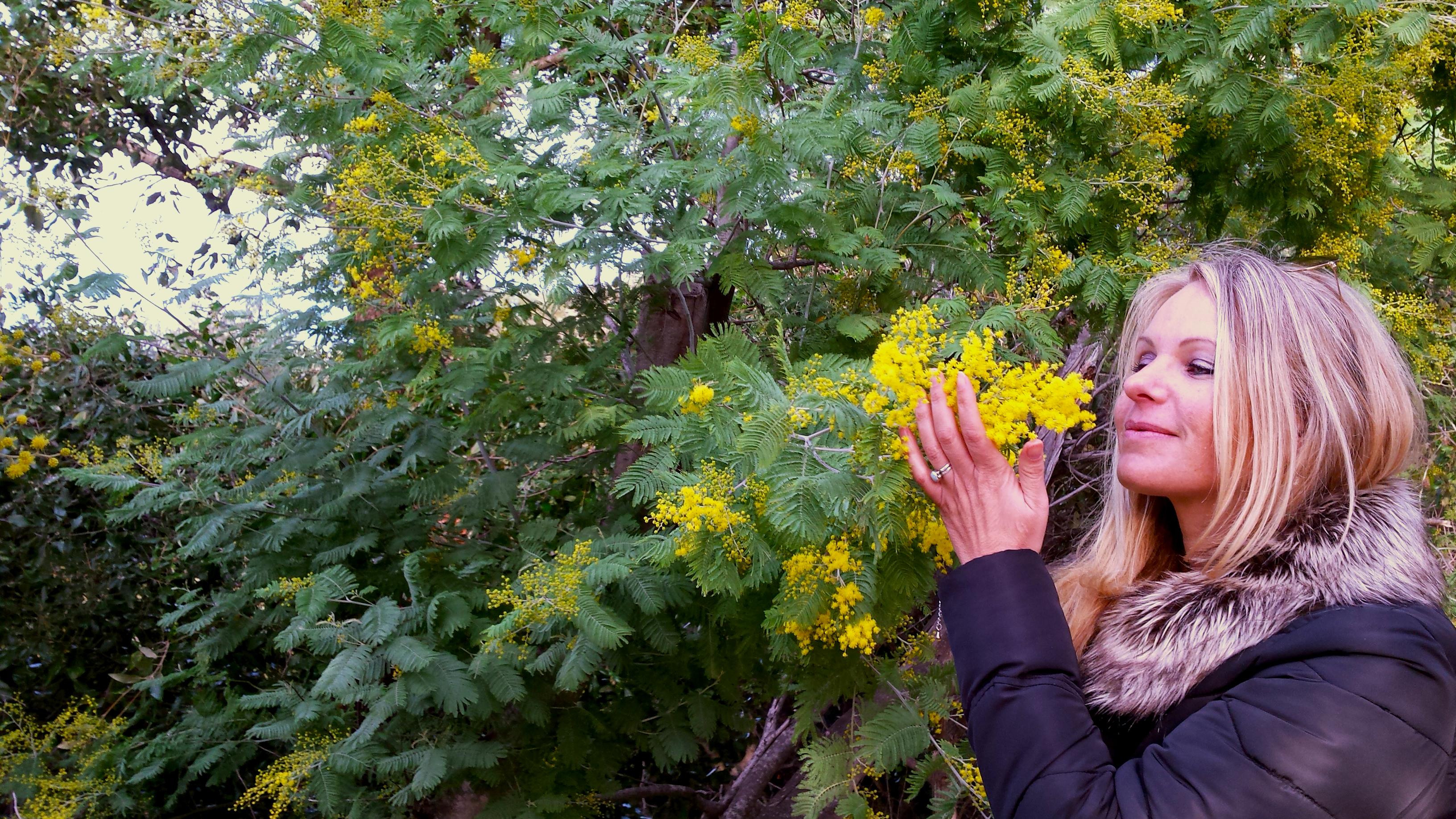 Randonnée autour du Mimosa dans le massif de l'Estérel