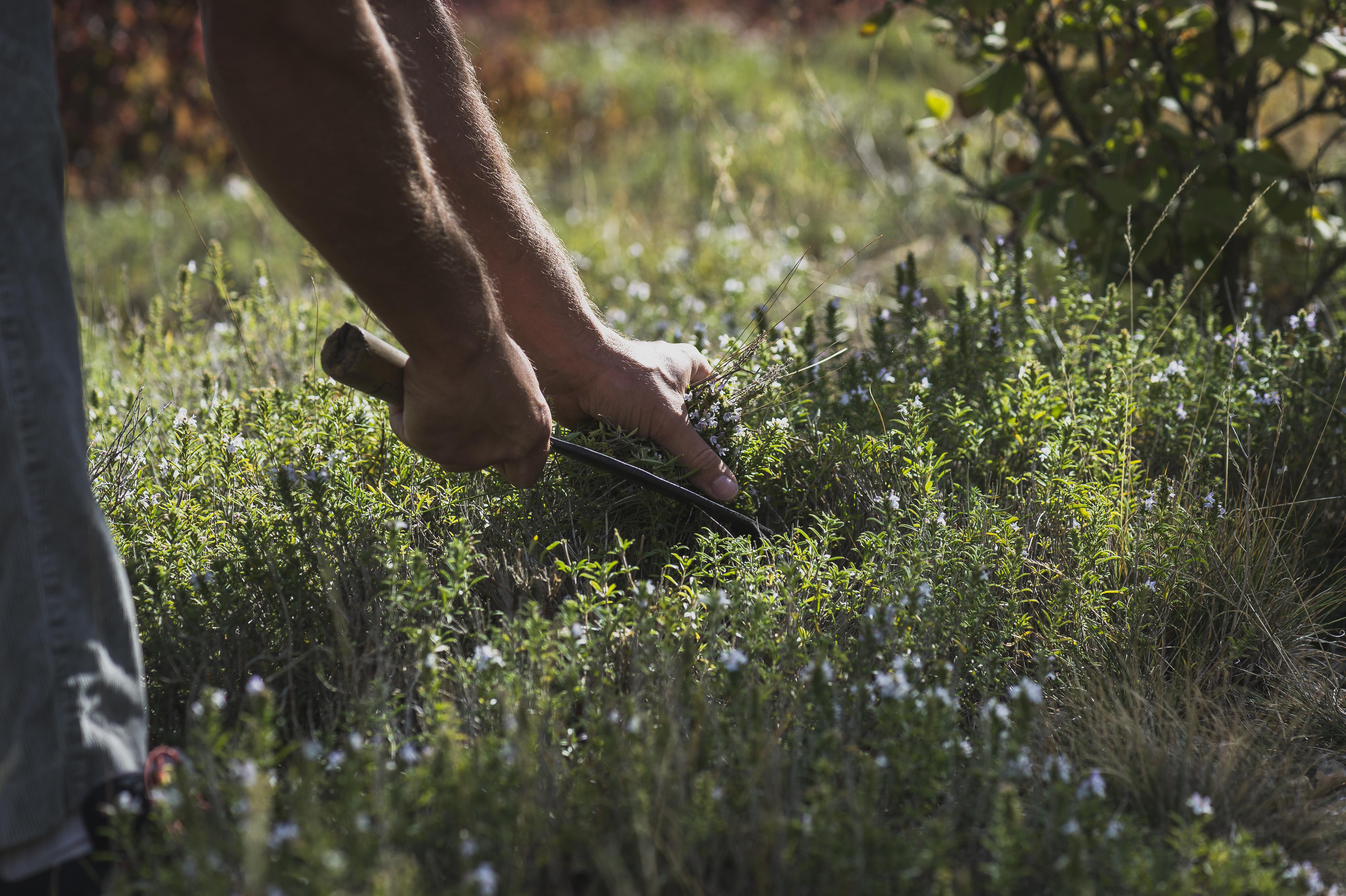 Atelier découverte des plantes ardéchoises