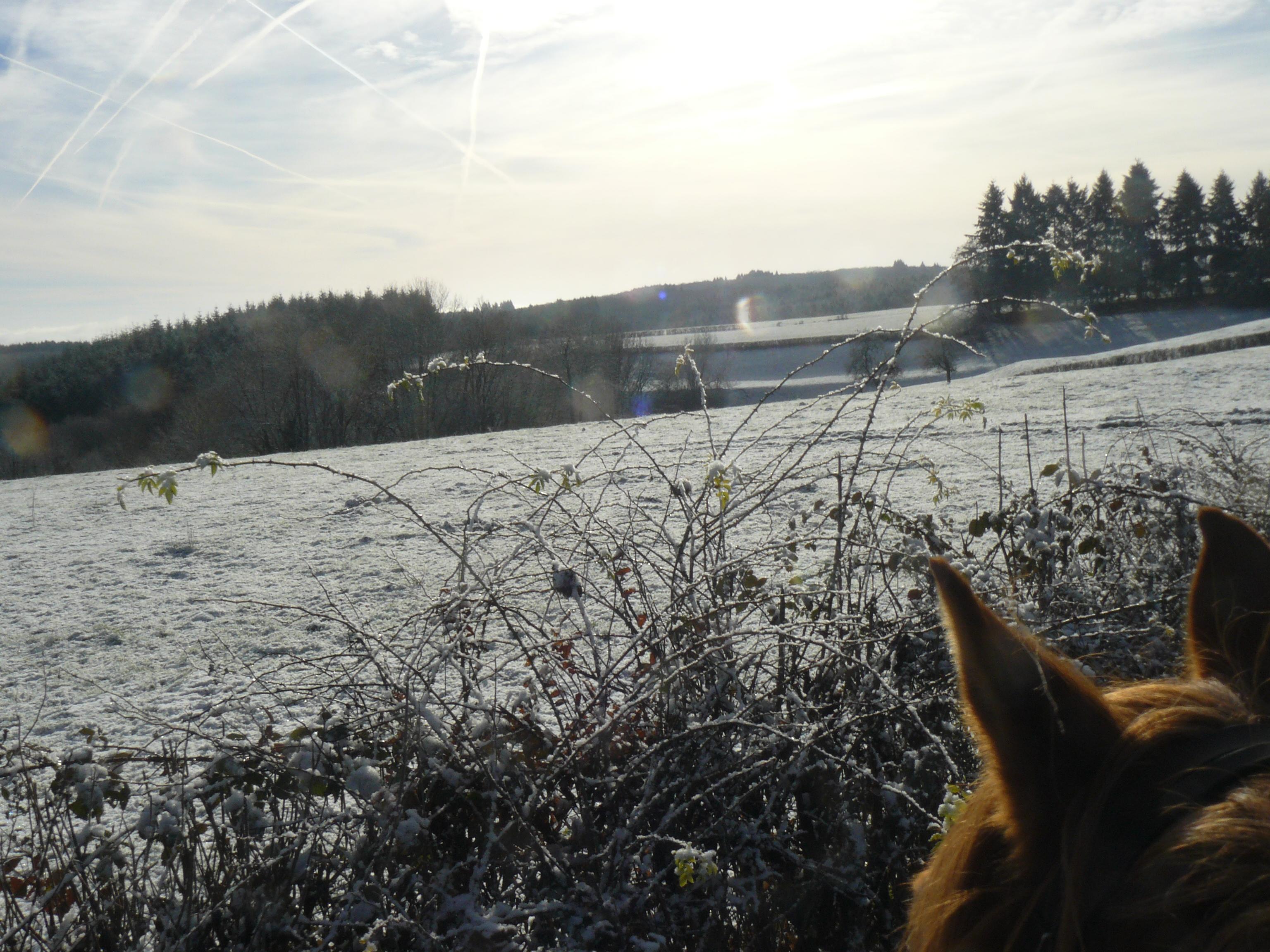 Randonnée d'une journée à cheval en Morvan