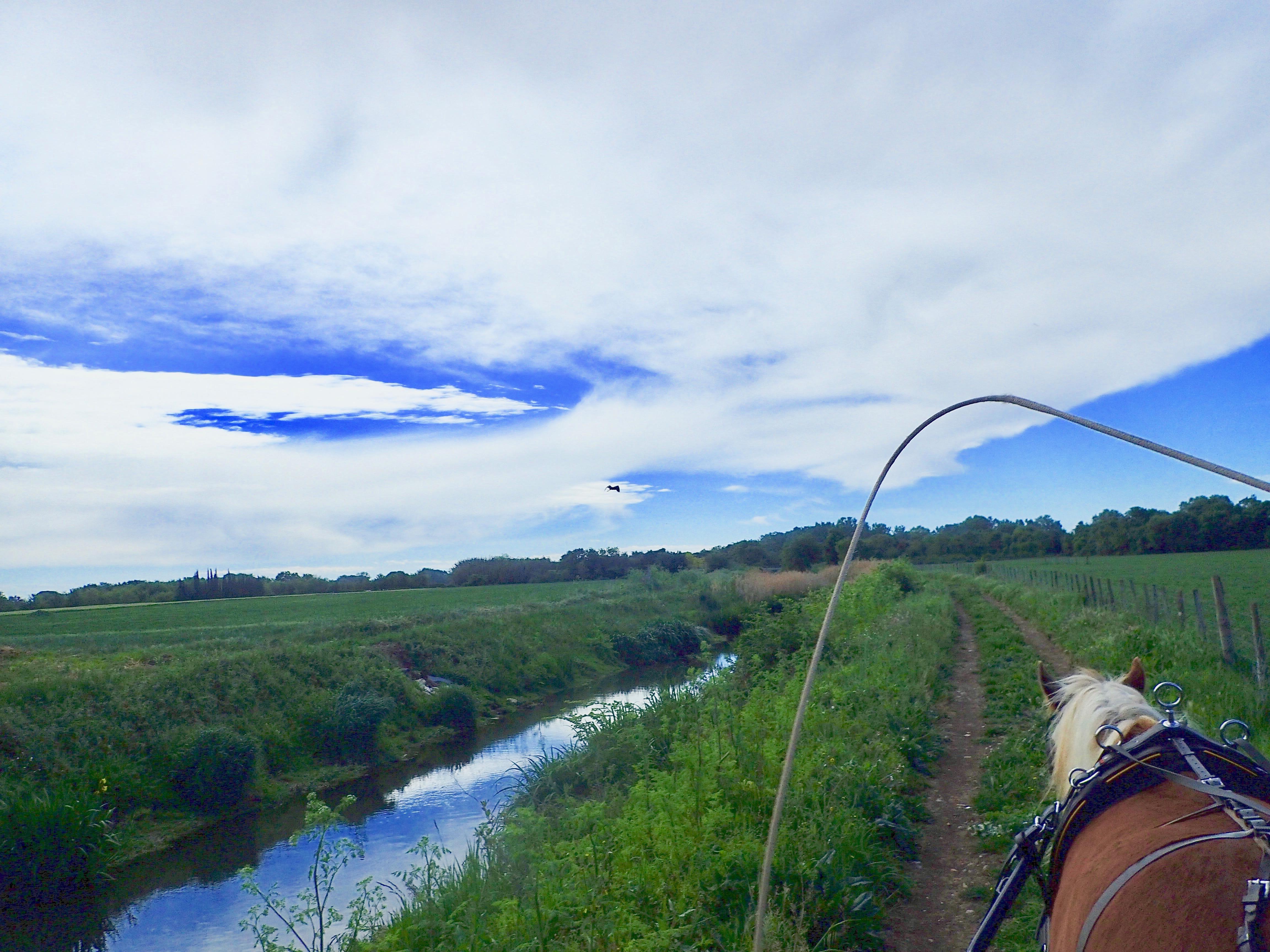 Découverte et promenade en calèche à Lansargues, près de Montpellier