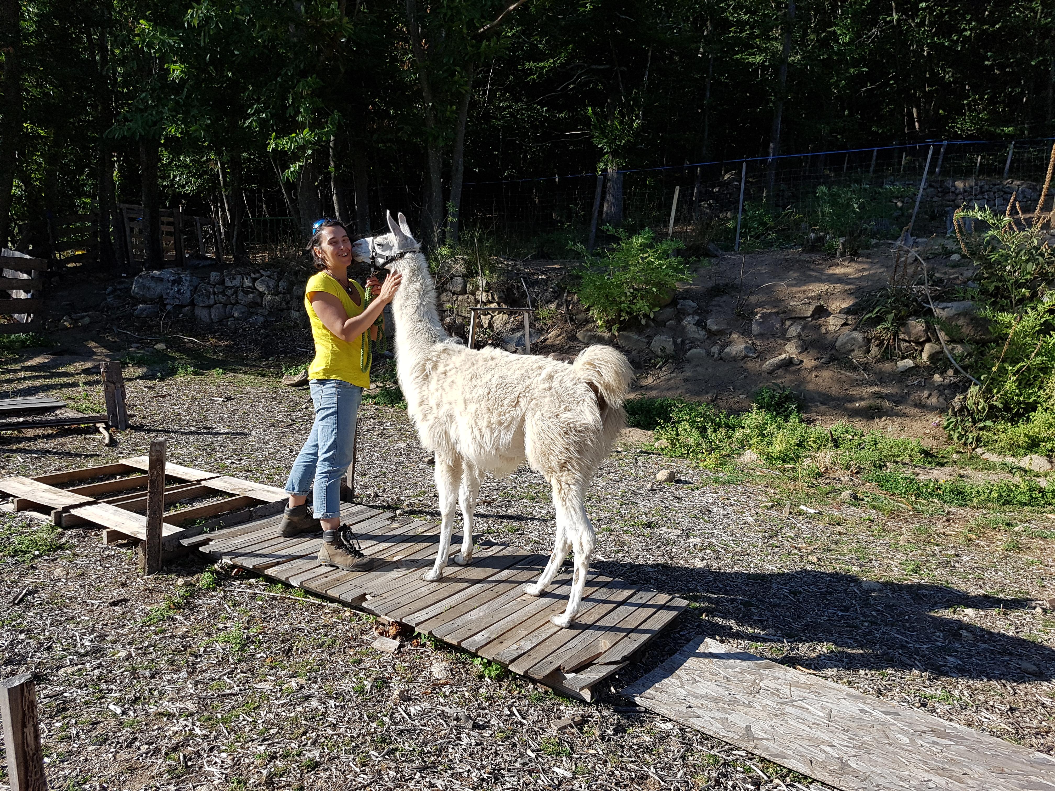 Journée découverte avec des lamas en Ardèche