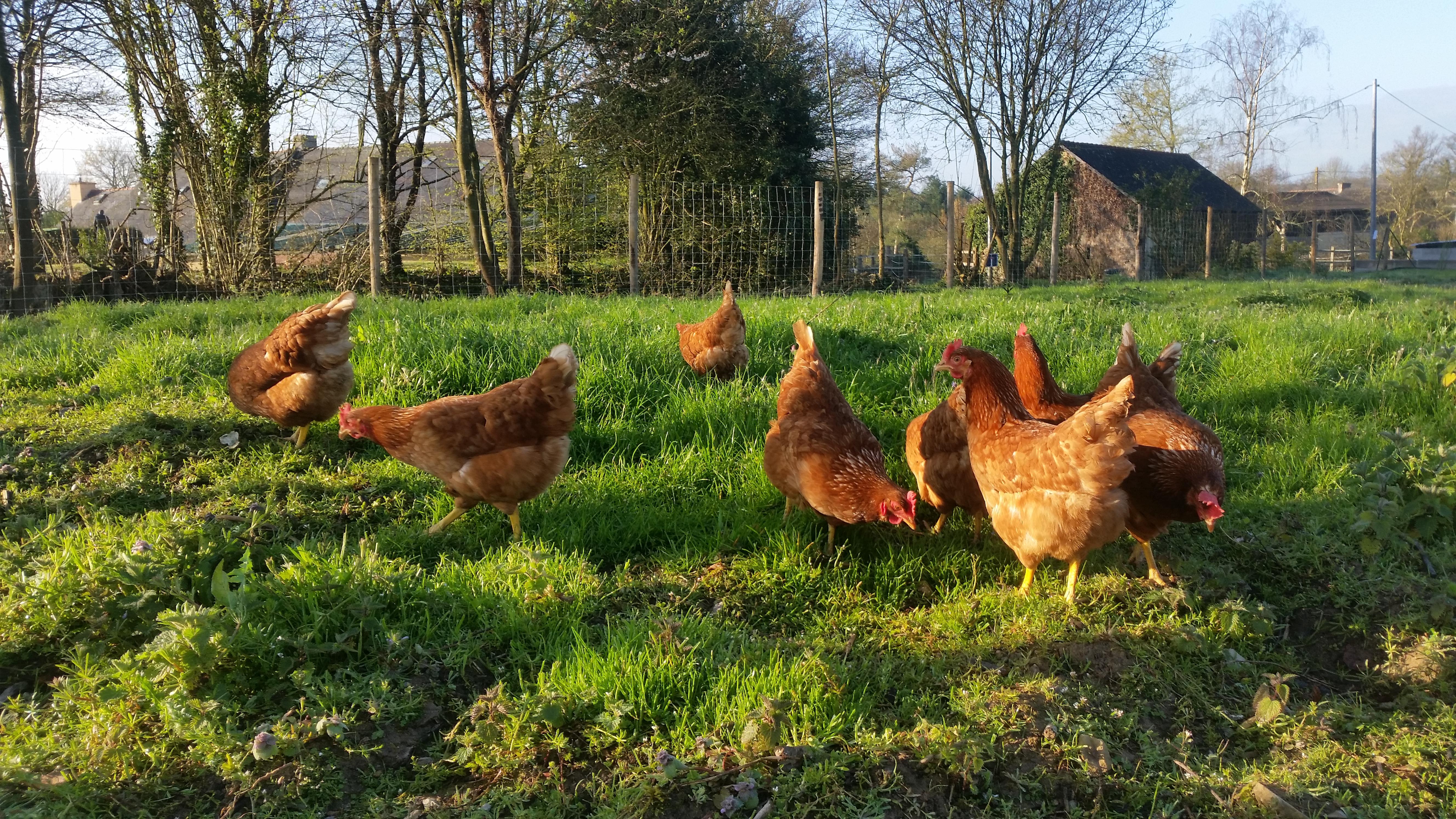 Visite d'une micro-ferme bio diversifiée, près de Rennes