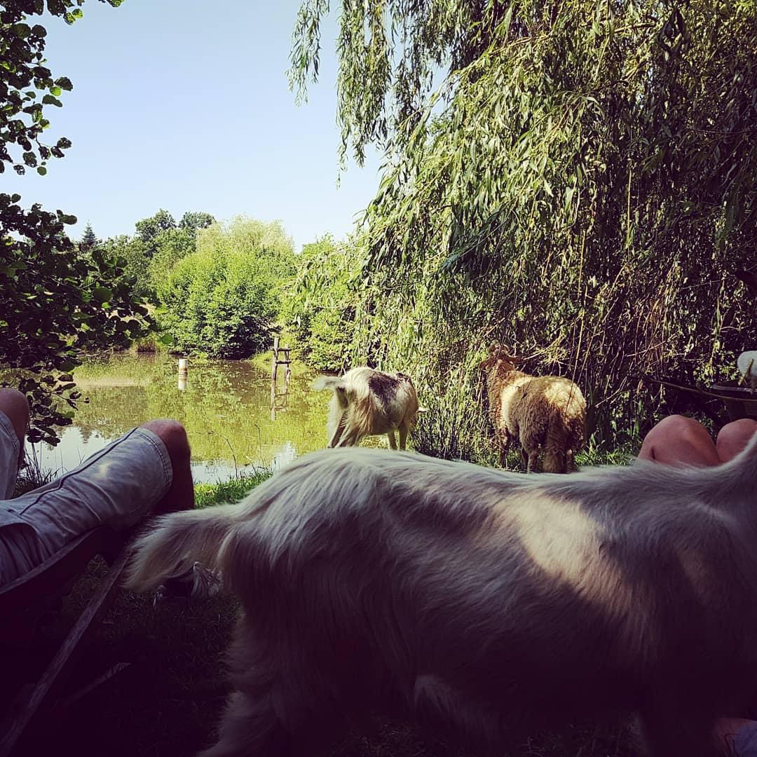 Immersion dans une ferme d'élevage bio, proche de Rennes