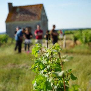 Dégustation de vins bio et visite commentée en 4x4 près de Nîmes