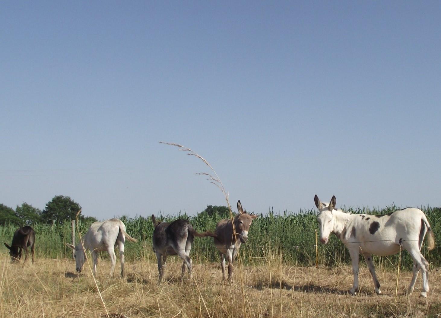 Une matinée à la ferme dans les Landes