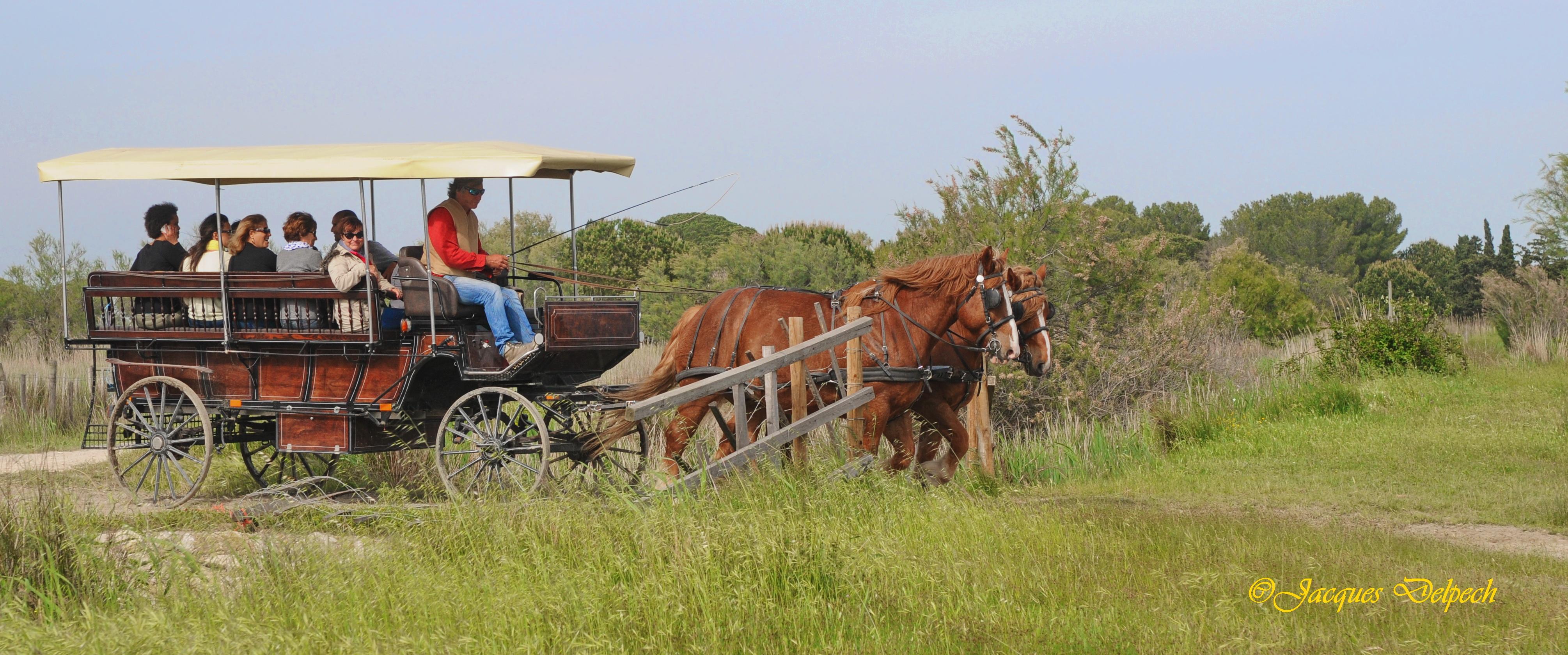 La Camargue en calèche avec un manadier