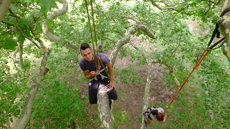 Escaladez des arbres en Ariège