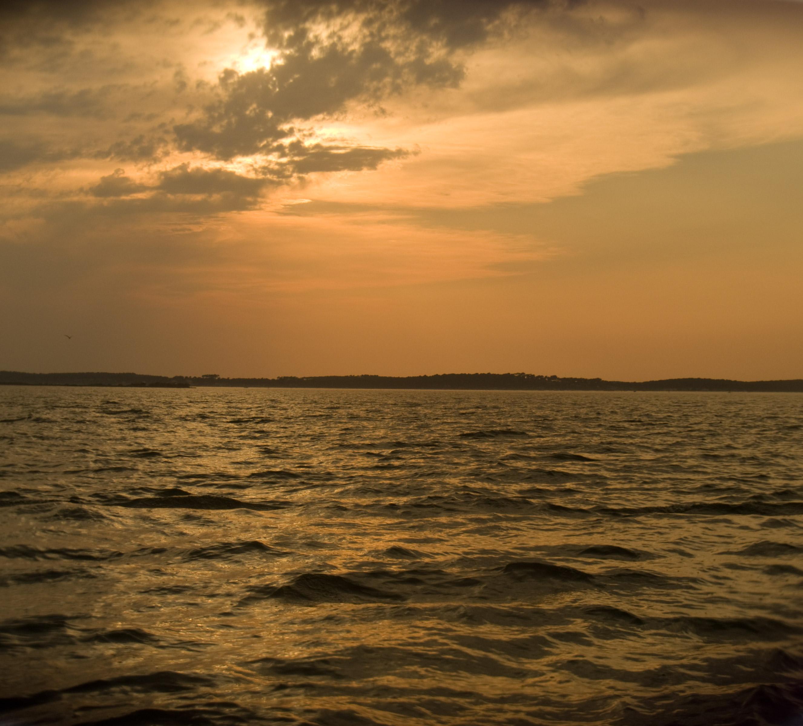 Balade en bateau sur l'île aux oiseaux