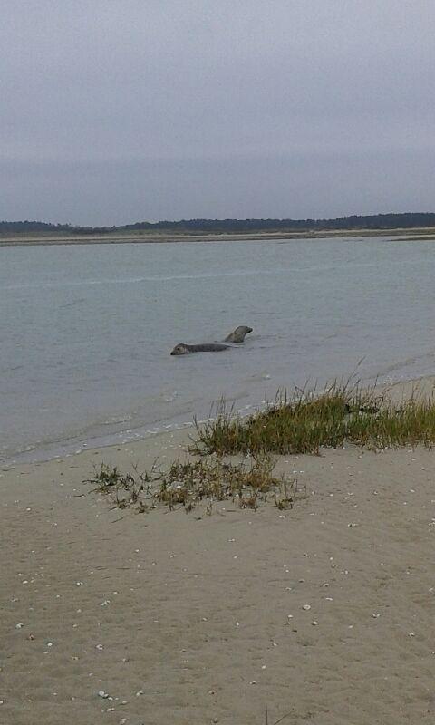A la rencontre des phoques de la Baie de Somme