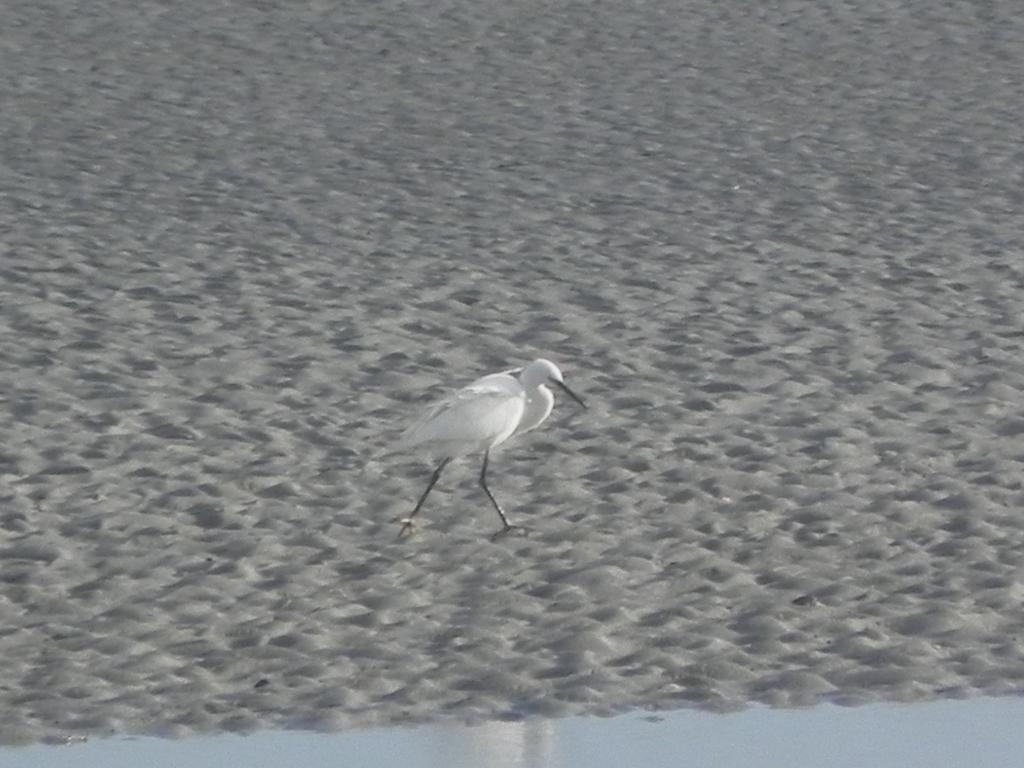 A la découverte des oiseaux et des phoques de la Baie de Somme