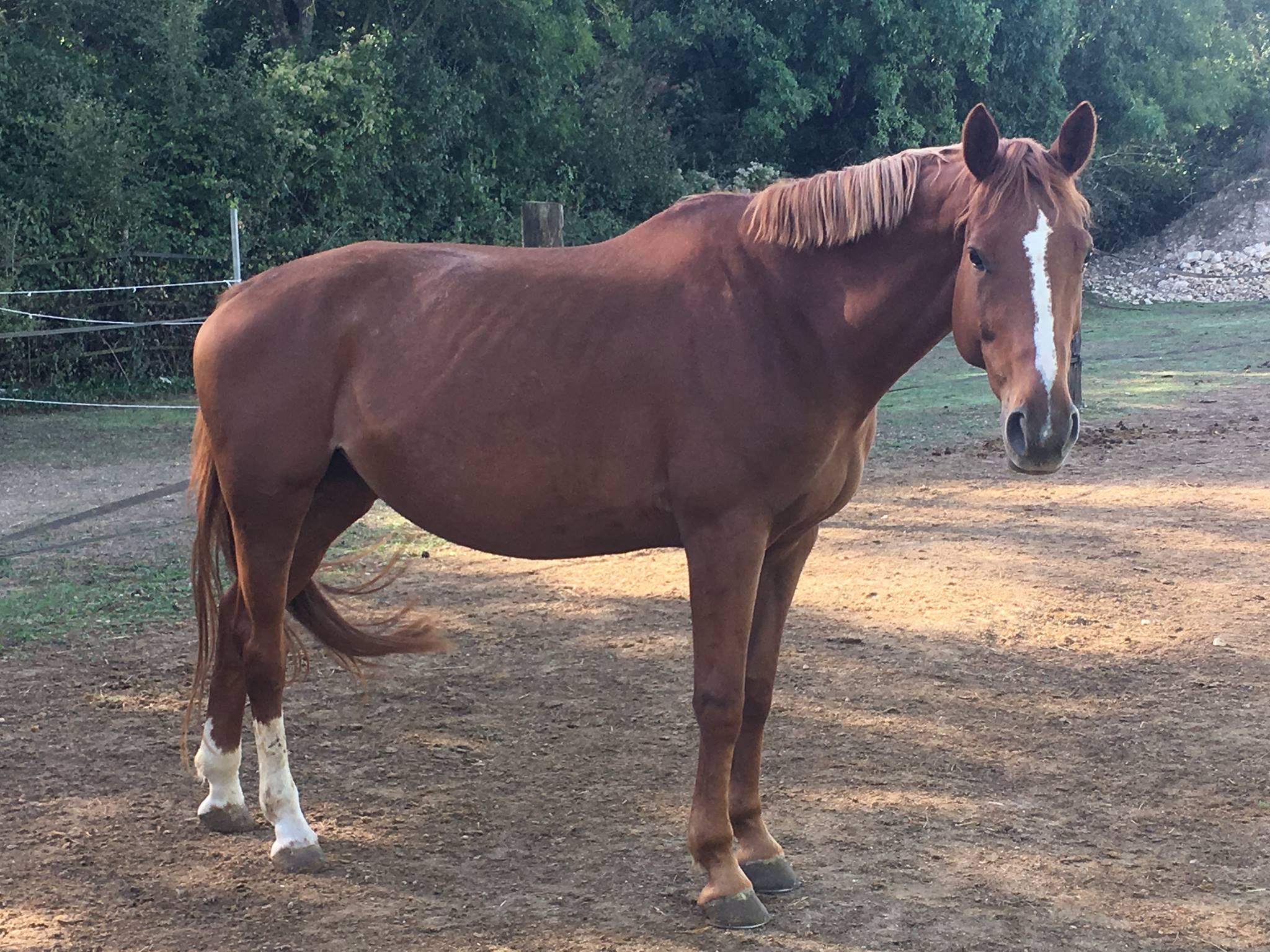 Balade à poney en autonomie