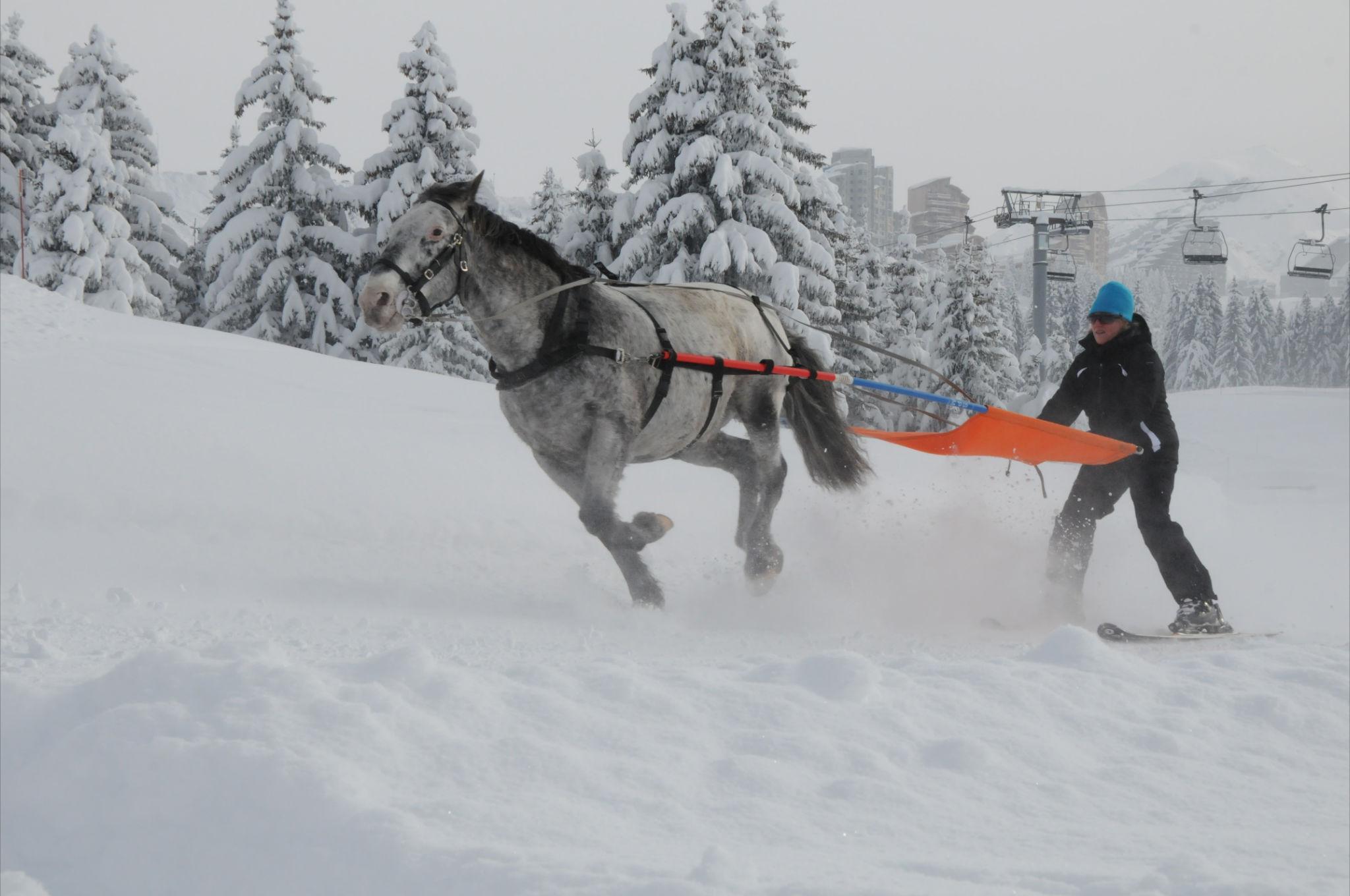 Ski joëring à Avoriaz