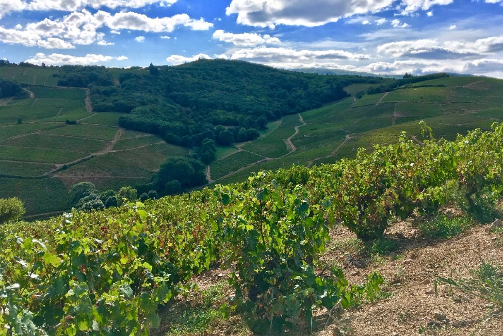 Visite du Beaujolais pendant une journée