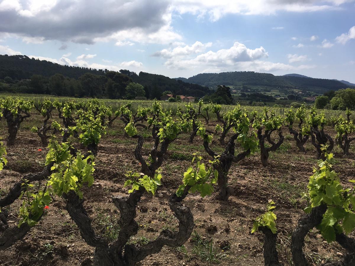 Visite apéritive au coeur des vins de Bandol