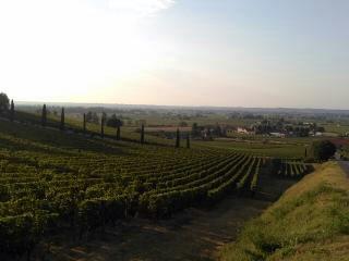 Randonnée découverte des propriétés viticoles bio