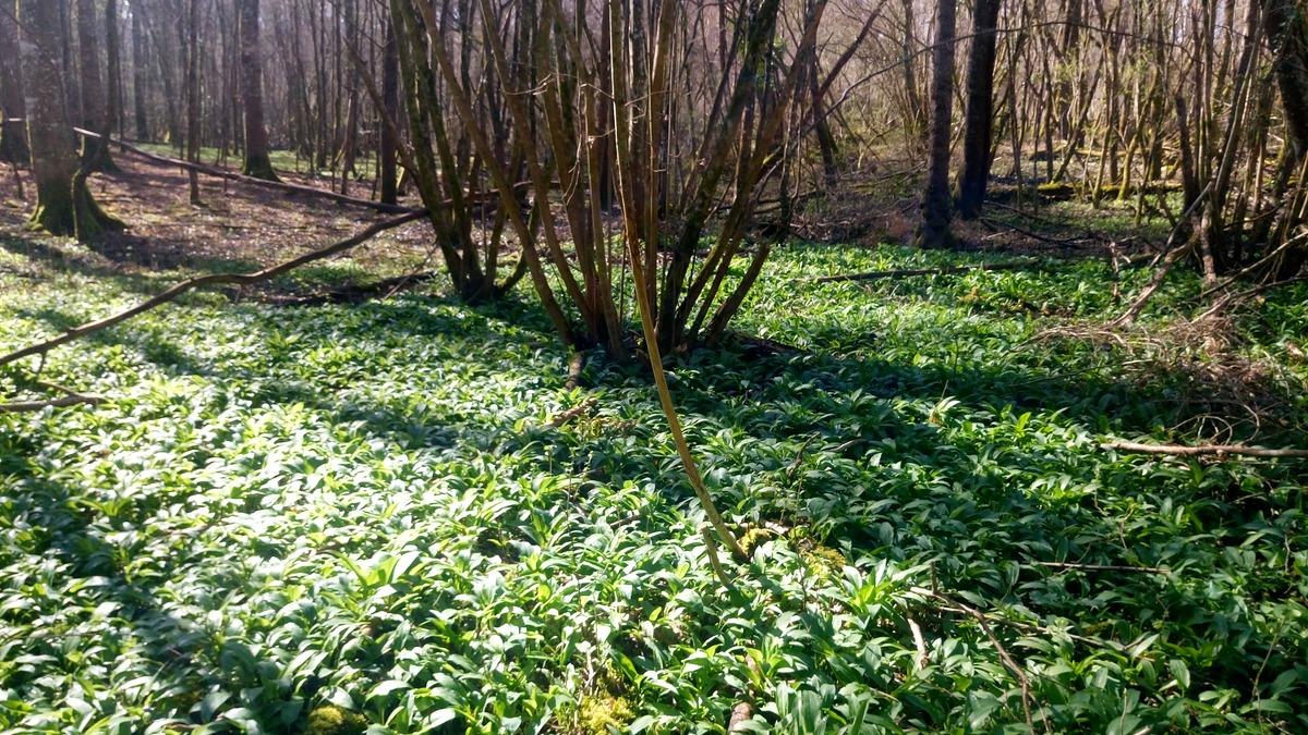 Balade et Cueillette de plantes sauvages en Haute-Savoie