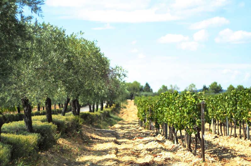 Demi journée Dégustation : A la découverte des nectars du Languedoc
