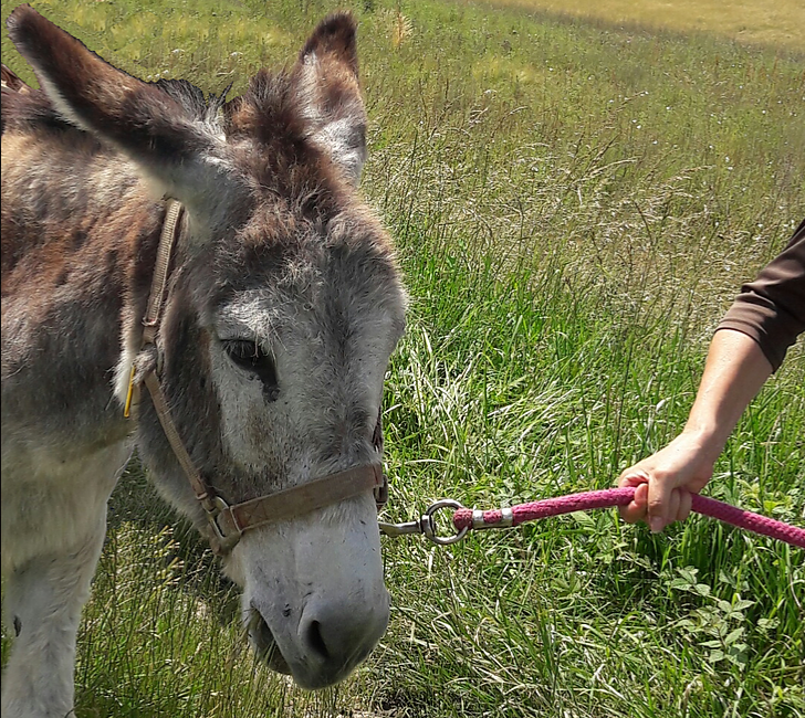 Balade guidée avec des ânes : Les dos d'ânes de la Lizonne