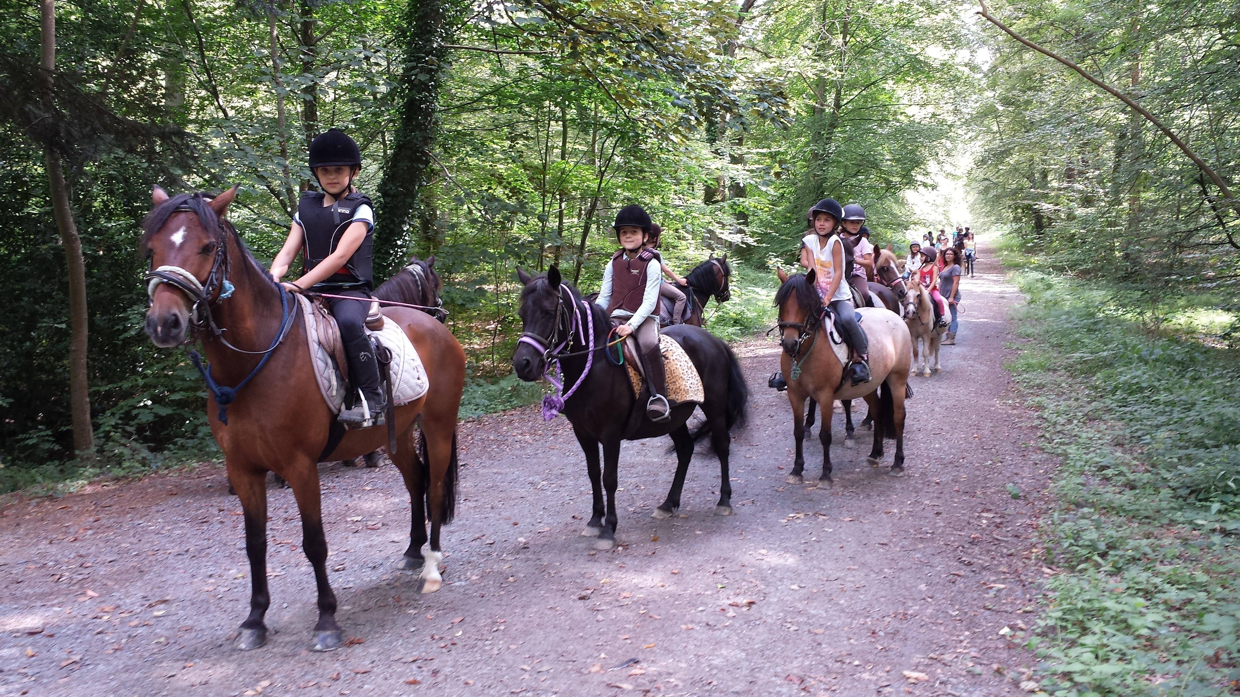 Balade à poney ou à cheval en forêt de Cerisy pour jeunes cavaliers !