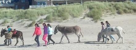 Rencontre avec les ânes au bord de mer