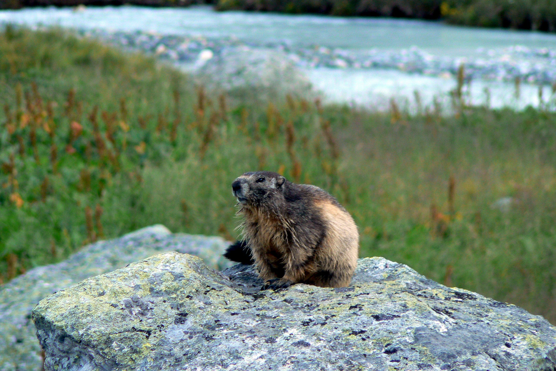 Observation de la faune & de la flore dans les Alpes